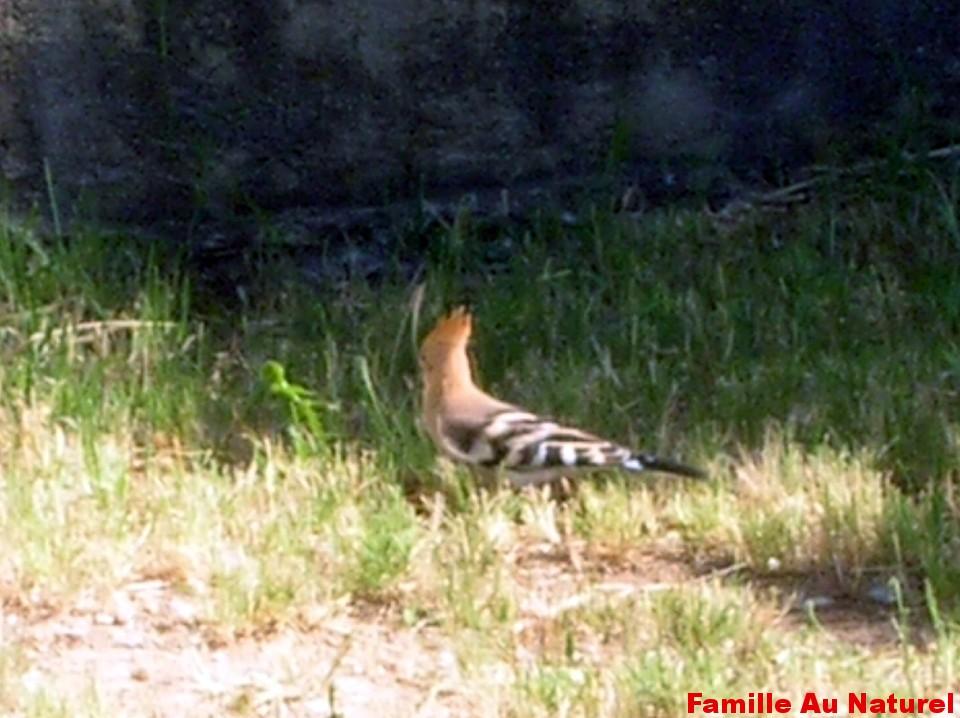 Devenir refuge LPO (Ligue pour  la Protection des Oiseaux)