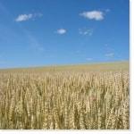 types de farine de blé
