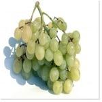 bicarbonate de soude sur la vigne