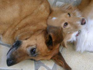 entretien des animaux: les chiens