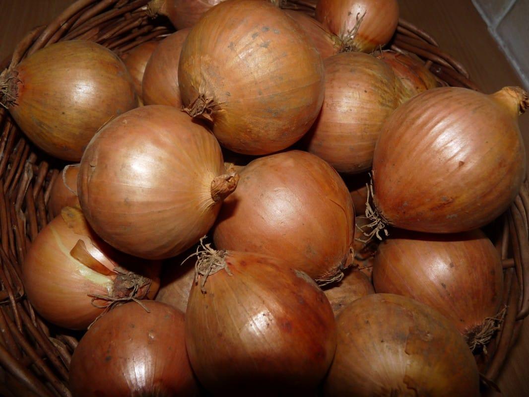 Les cataplasmes d'oignons pour votre santé