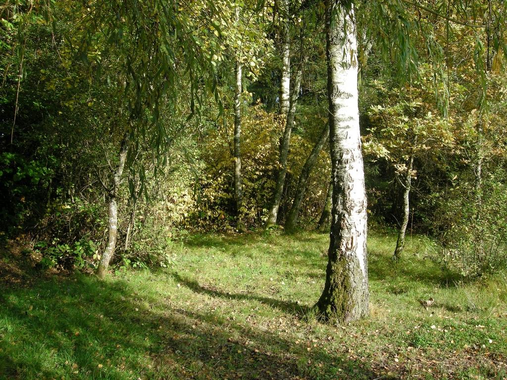 Les labels qui protègent nos forêts: FSC et PEFC