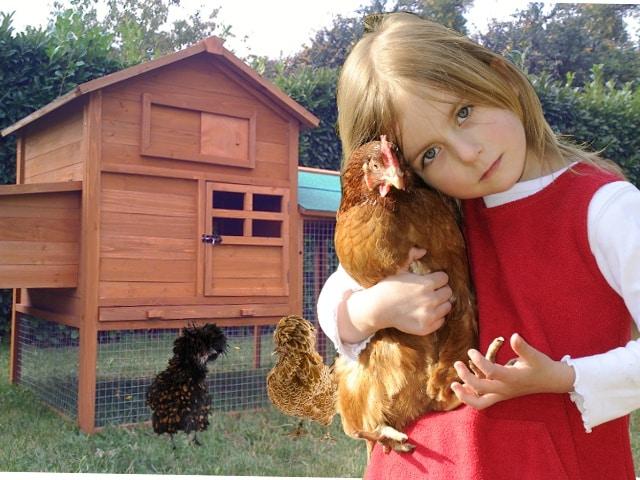 Adoptons des poules dans nos Jardins!
