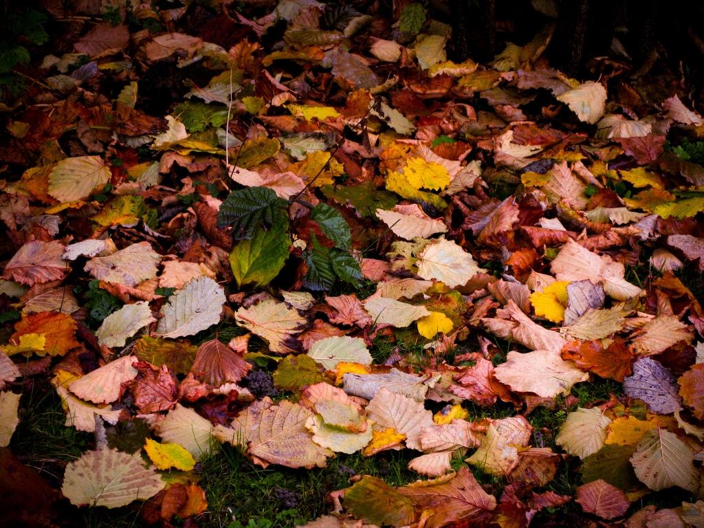 Jardin: un automne écologique