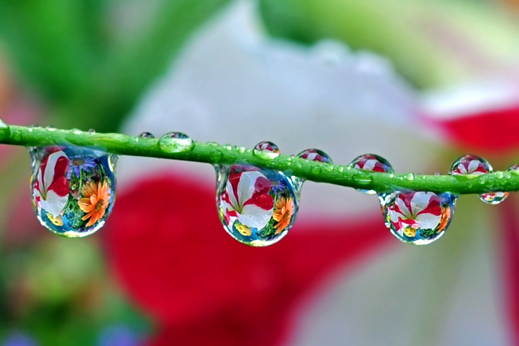 Les eaux florales: notre atout beauté au naturel!