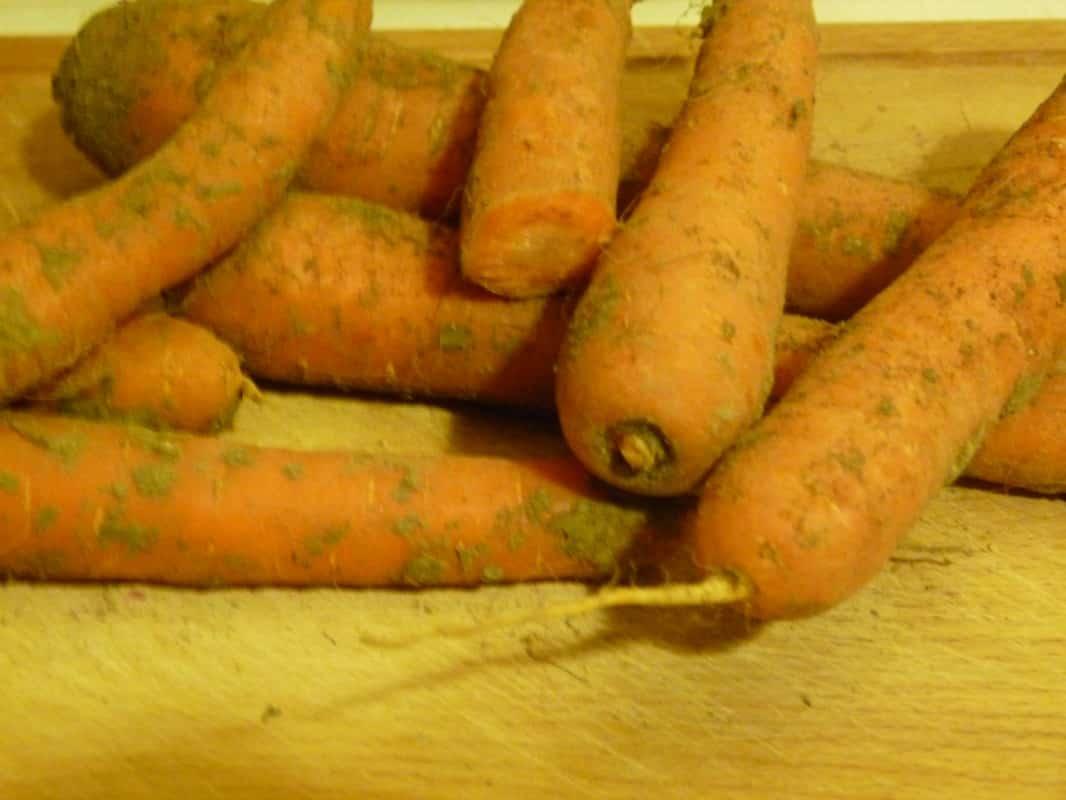 Galettes aux fanes de carottes