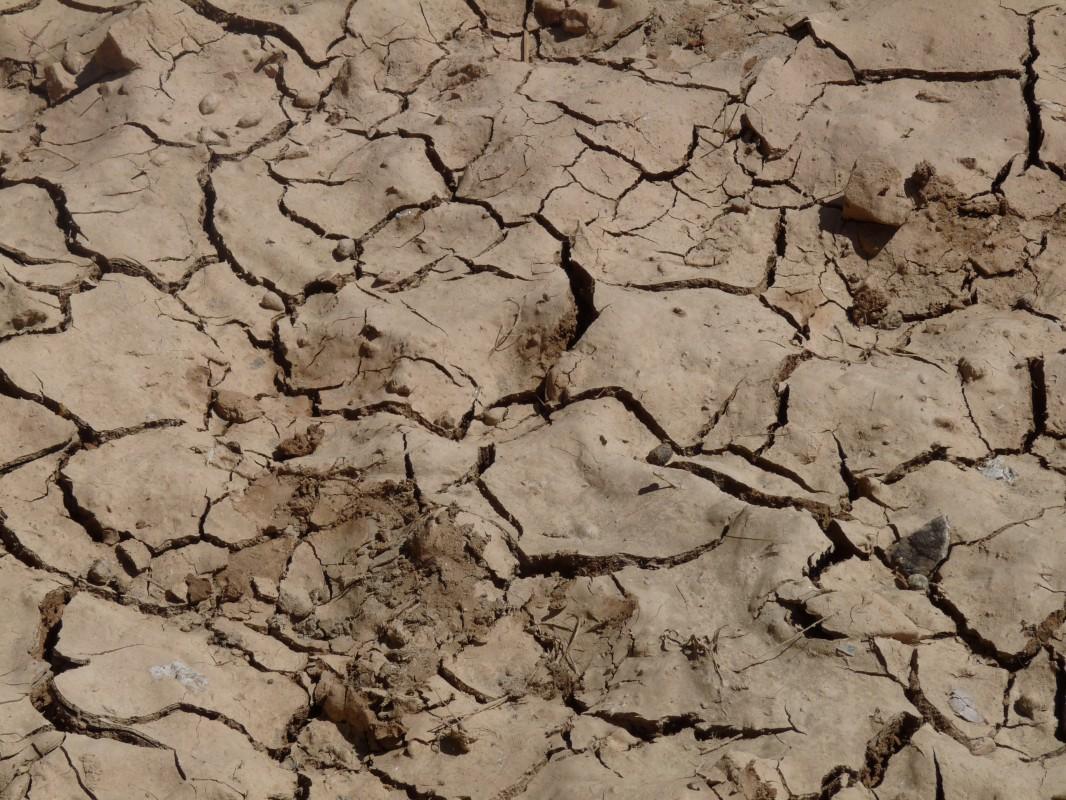 Attention, la sécheresse nous guette : des précautions à prendre