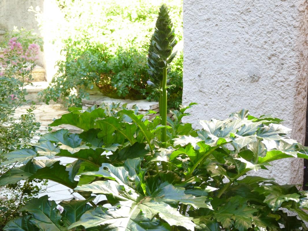 Jardin et conomie d 39 eau c 39 est possible autour du naturel for Entretien jardin guidel