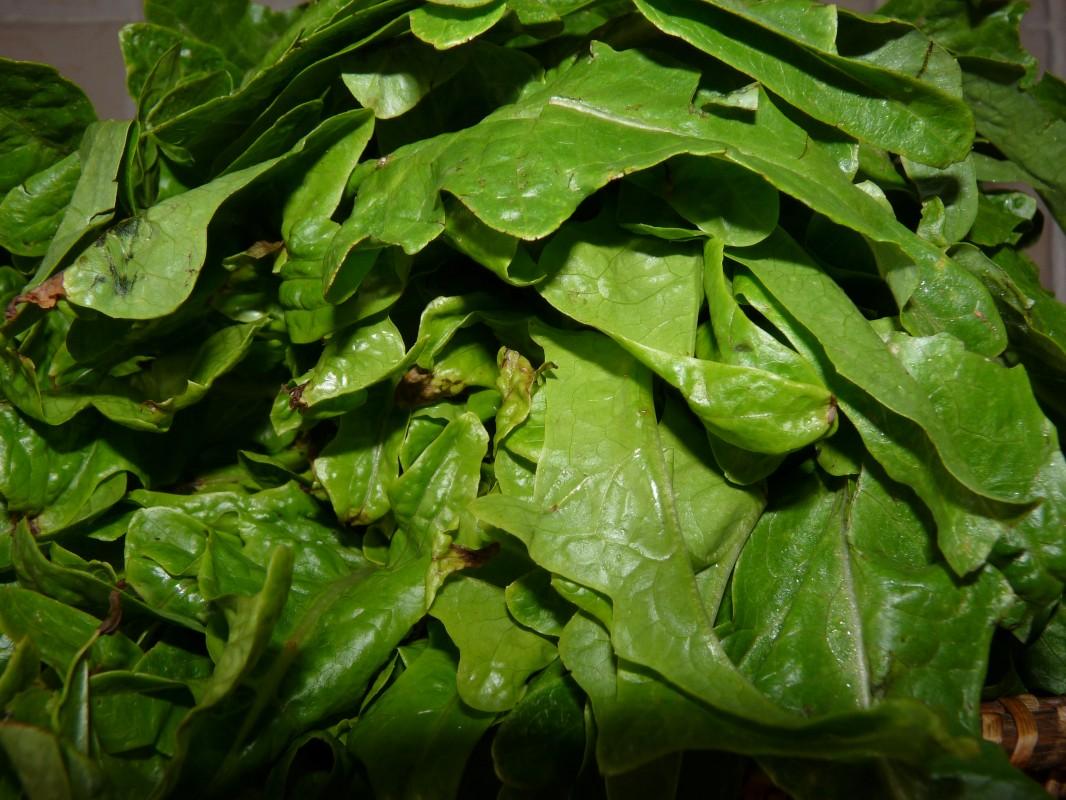 Manger sa salade verte écolo