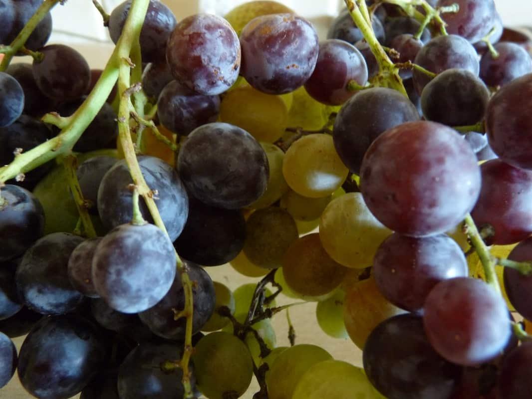 La cure de raisin : mode d'emploi