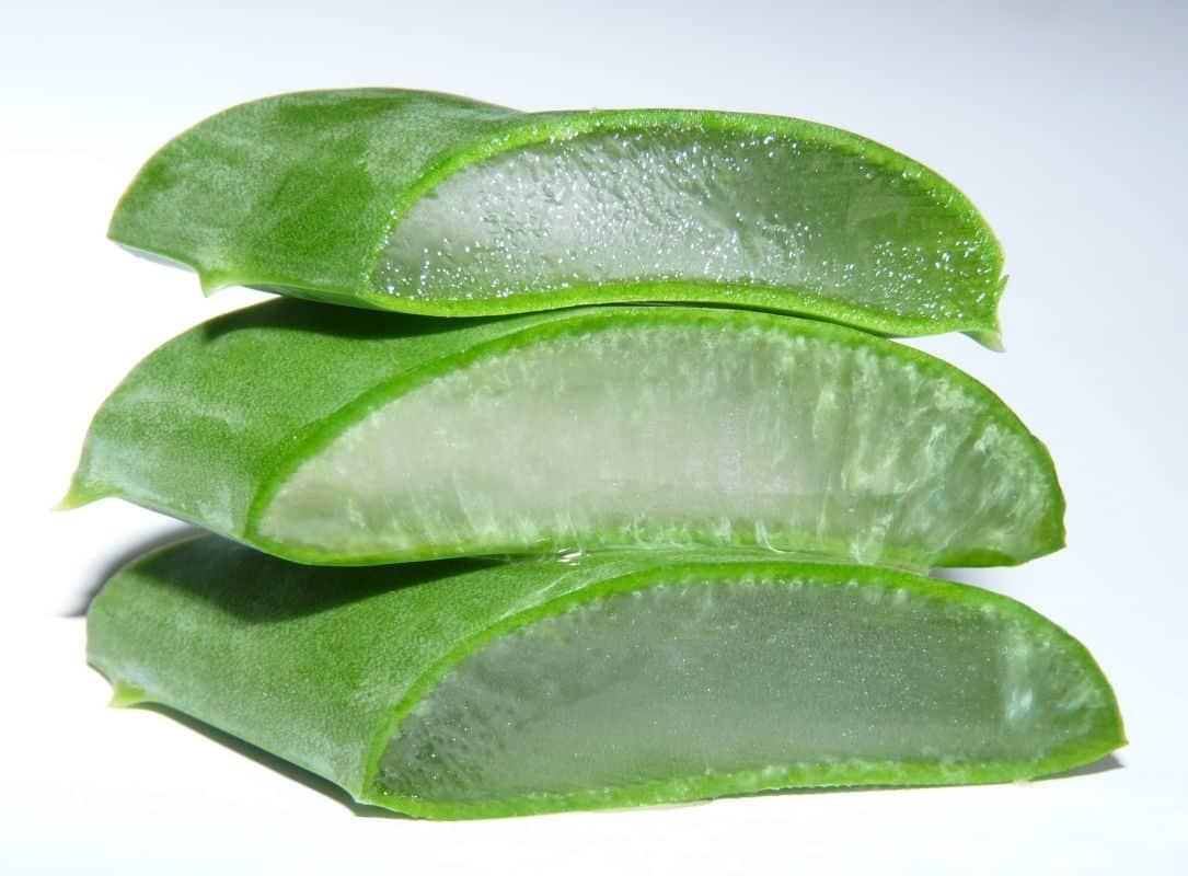 L 39 aloe vera en plante d 39 int rieur int r ts et astuces - Plante aloe vera chambre ...