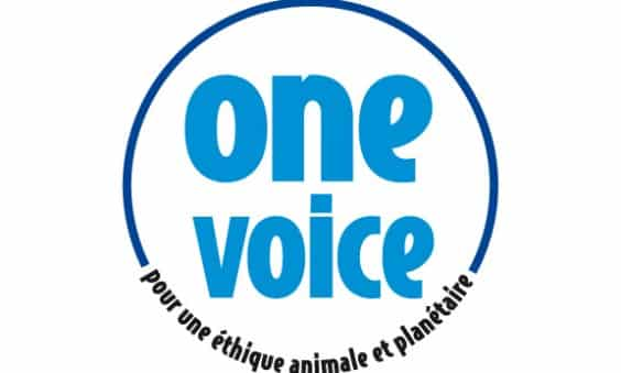 one voice bleu