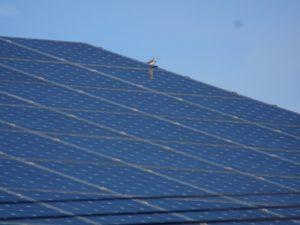 panneaux solaires en habitat groupé