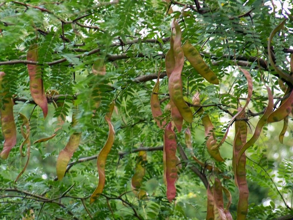 Les 6 plantes coup de pouce pour mincir autour du naturel for Plante pour mincir