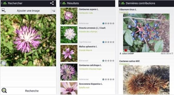 Identifier une plante avec PlantNet et votre smartphone
