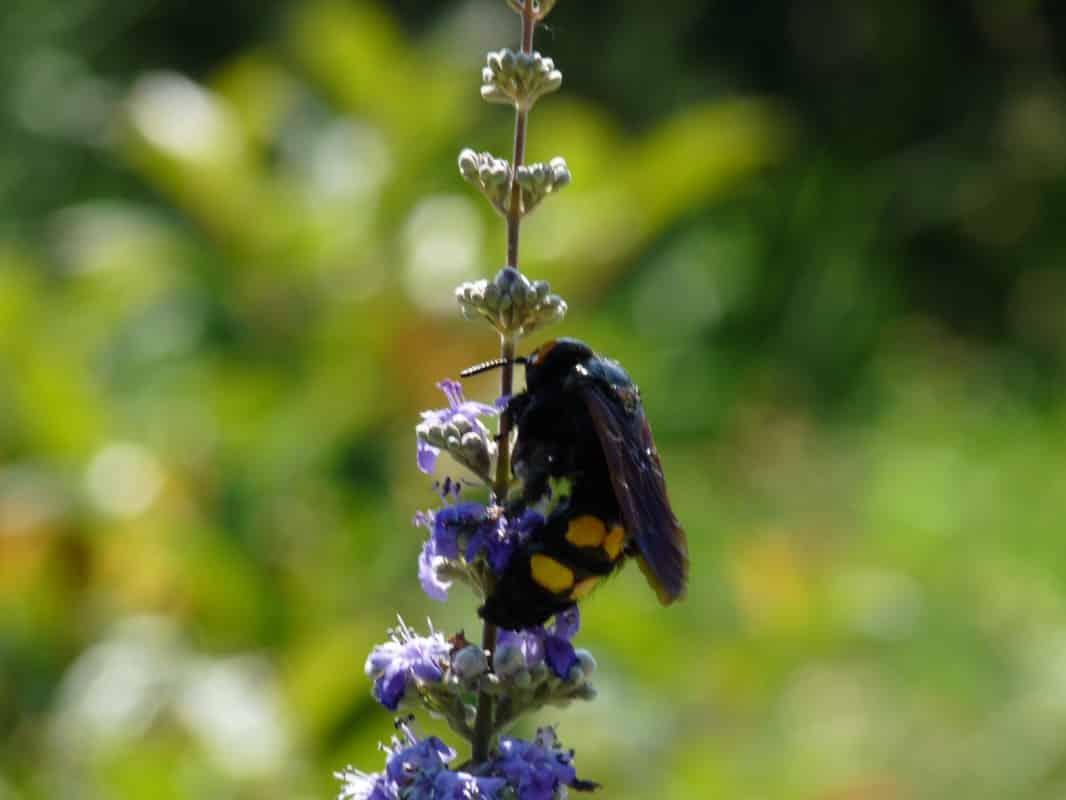 Apithérapie: les produits de la ruche pour notre santé