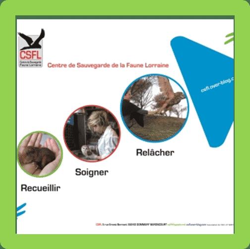 Aidez le centre de sauvegarde de la faune Lorraine