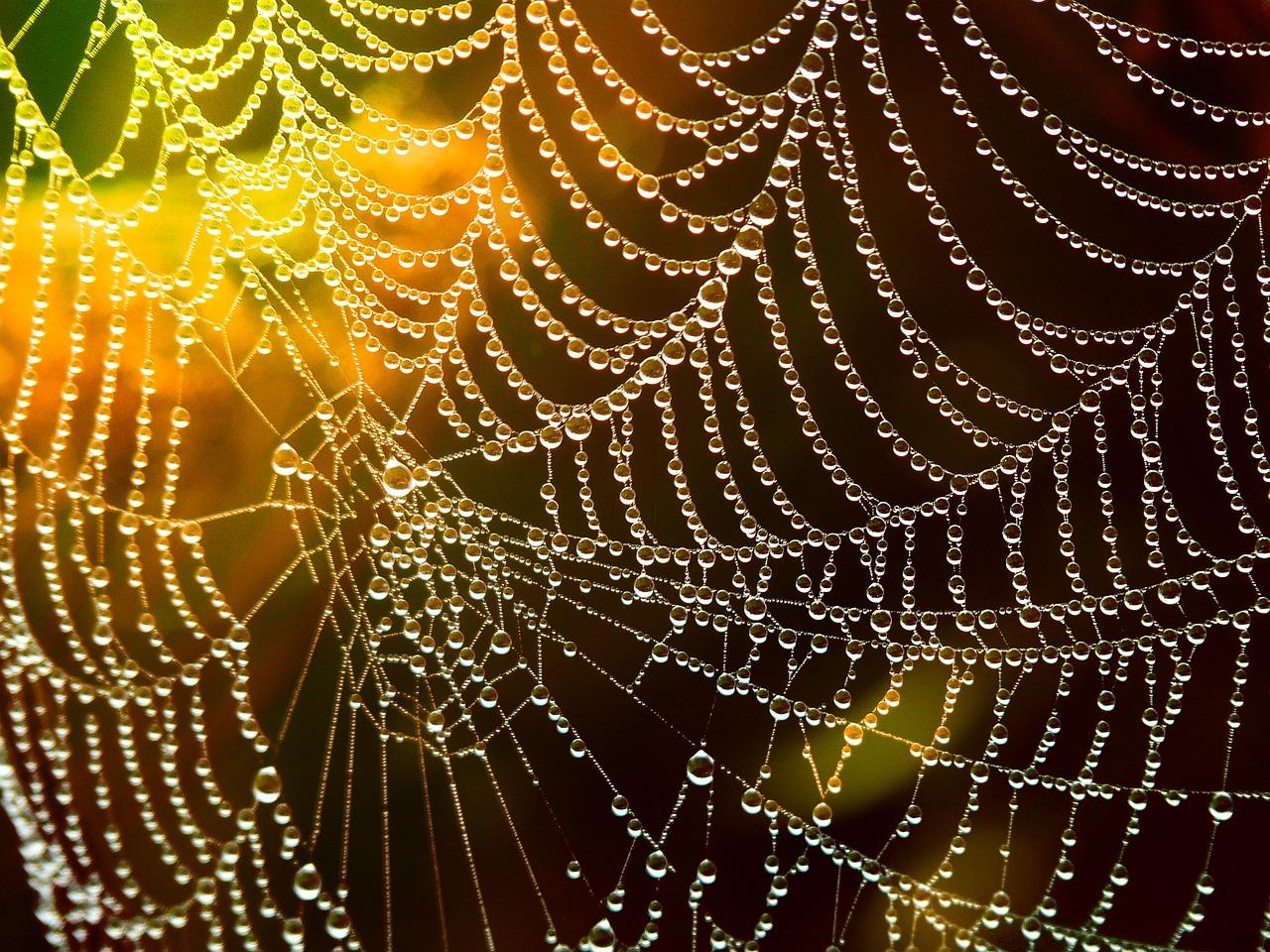 Se débarrasser des toiles d'araignées dans la maison
